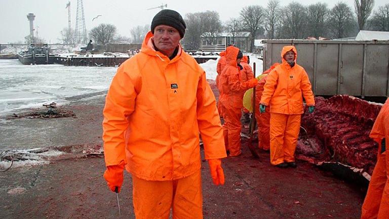 Harald Benke bei der Sektion eines Finnwals.