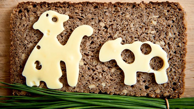 Auf einem Butterbrot liegt eine Scheibe Käse in der Form eines Schafs
