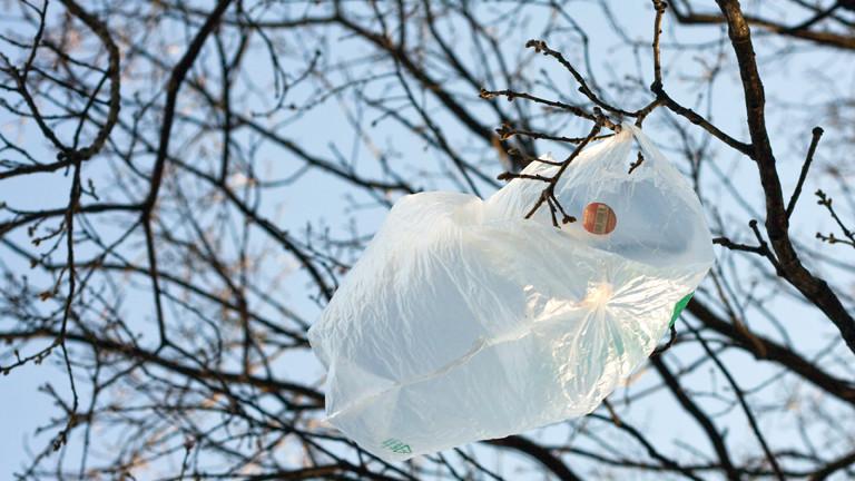 Plastiktüte im Baum