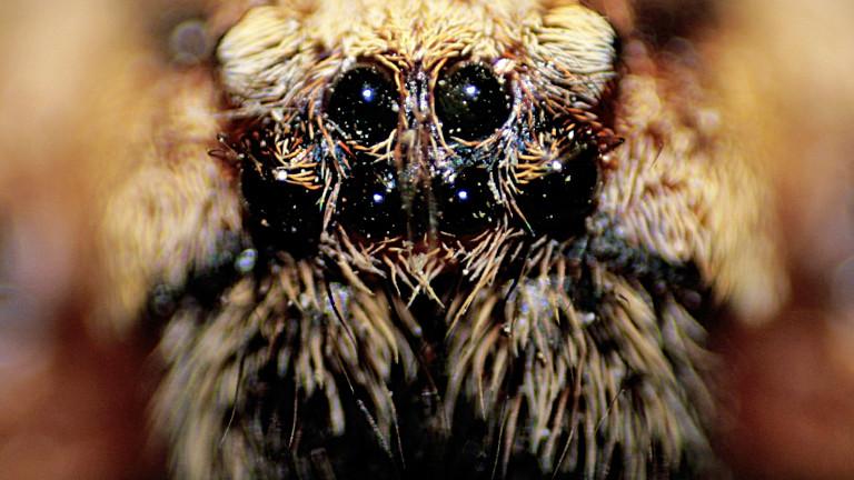 Eine extreme Nahaufnahme einer Spinne, als ob sie einen direkt anschaut.