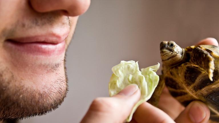 Ein Mann füttert eine Schildkröte