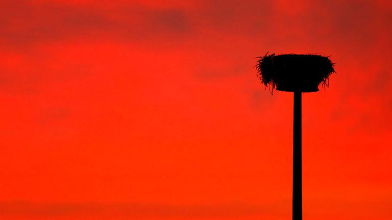 Ein leeres Storchennest vor Abendhimmel.