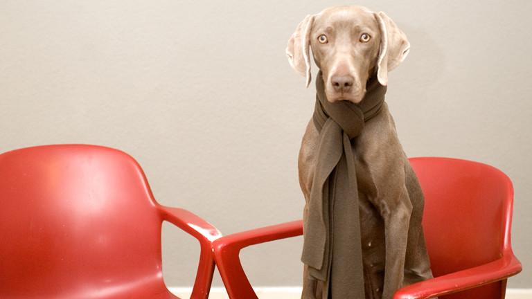 Ein Hund mit Schal sitzt auf einem roten Plastikstuhl.