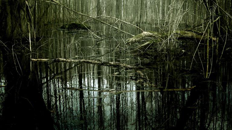 Ein Sumpf mit Bäumen.