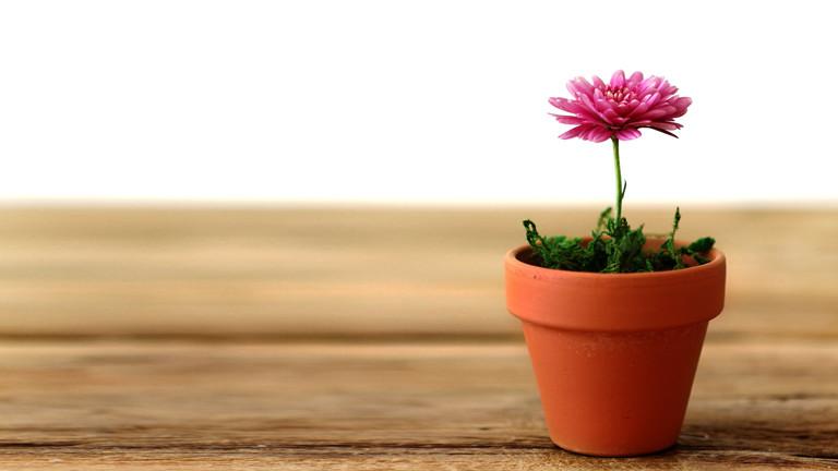 Eine Topfblume auf einem Tisch.