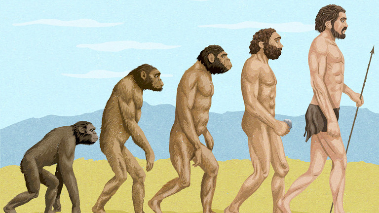 Eine Reihe - vom Affen bis zum Mensch