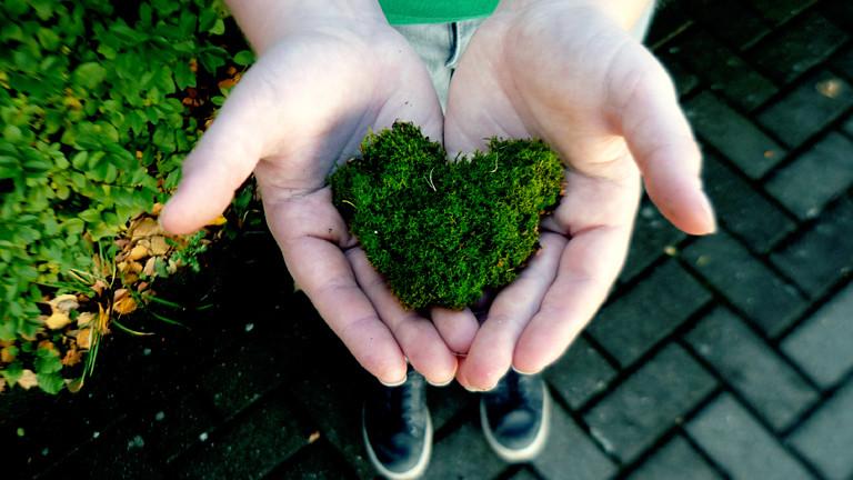 Grünes Herz aus Wiese
