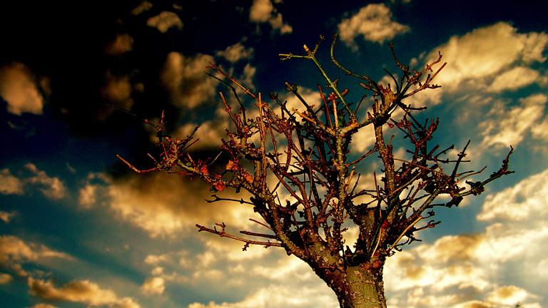 Baum vor wolkigem Himmel