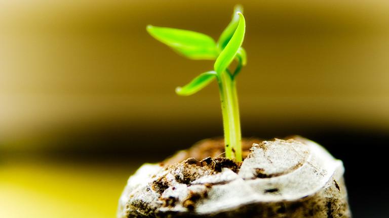 Ein kleines grünes Pflänzchen wächst aus einem Topf