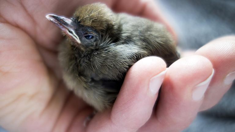 Jungvogel in Menschenhand