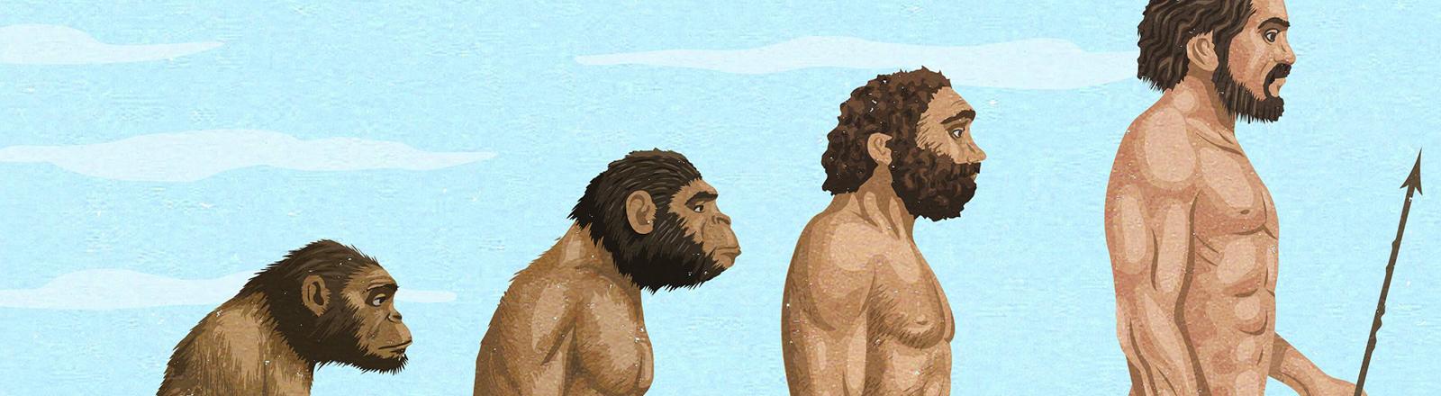 Eine Reihe: Vom Affen zum Mensch