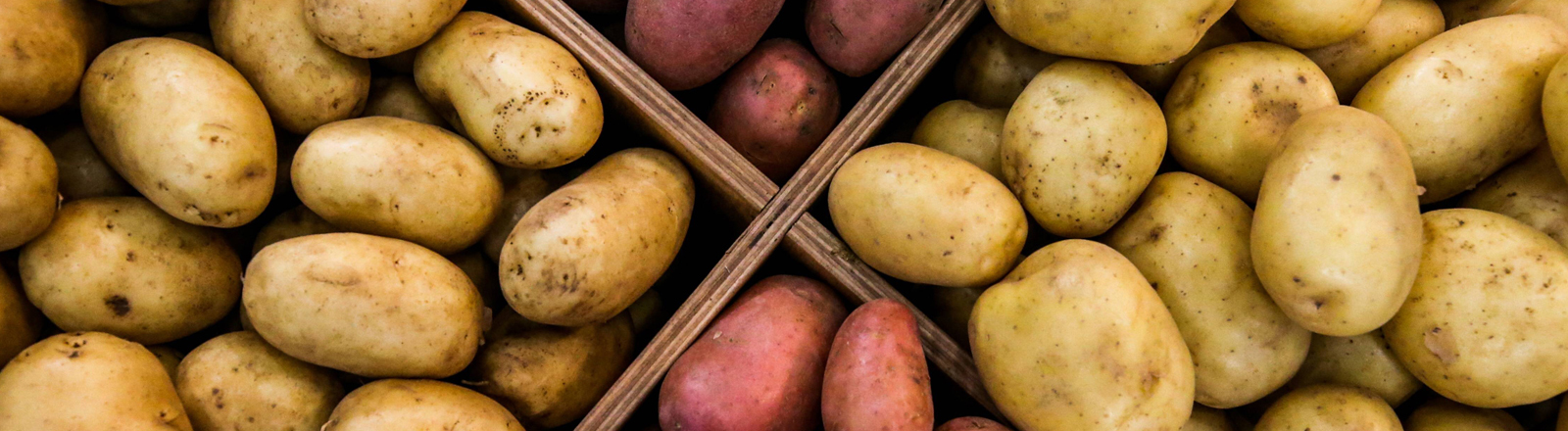 Zwei verschiedene Sorten Kartoffeln. Hell und rötlich.