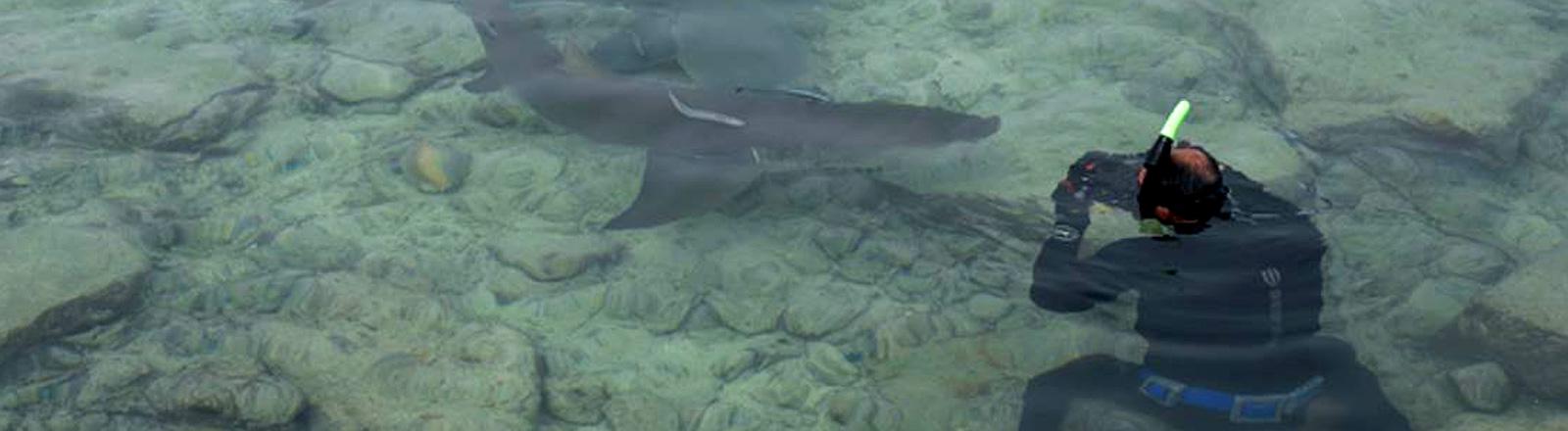 Erich Ritter im Wasser mit Haien