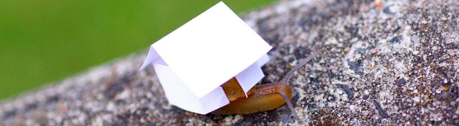 Eine Schnecke mit einem Papierhäuschen