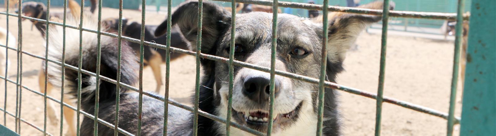 Ein Hund steckt seine Nase durch ein Gitter, wedelt mit dem Schwanz und hechelt