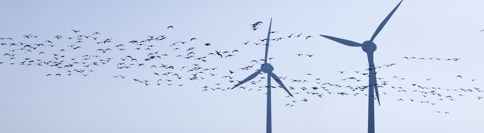 windräder und vögel