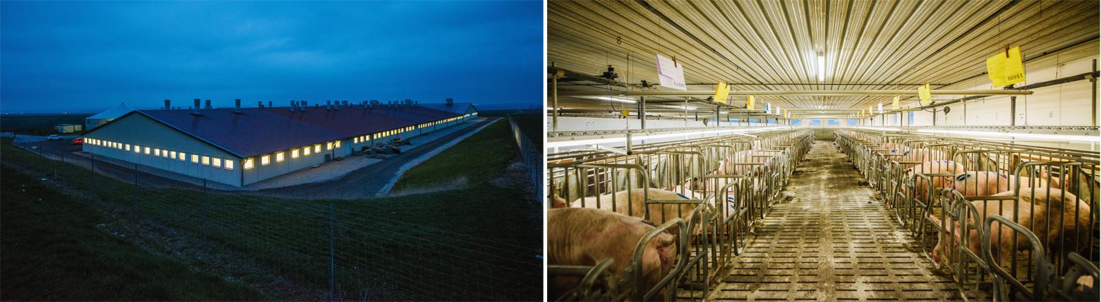 Deckstall des Unternehmens ADIB Aschara von Ex-Bauernpräsident Klaus Kliem