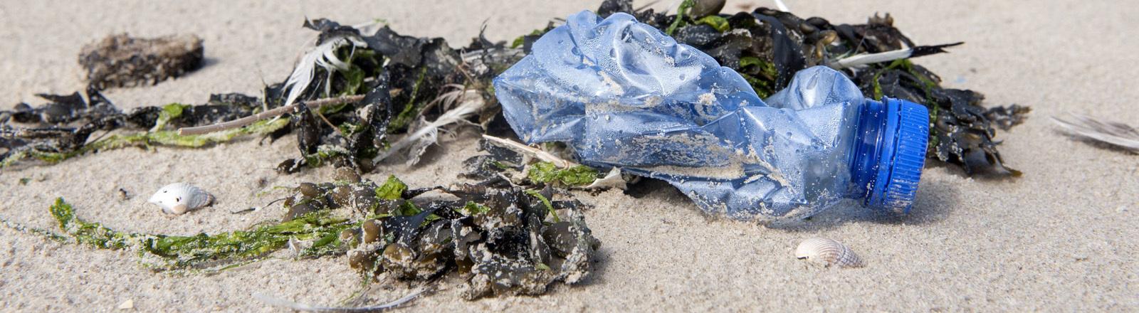 Plastikflasche mit Algen am Strand