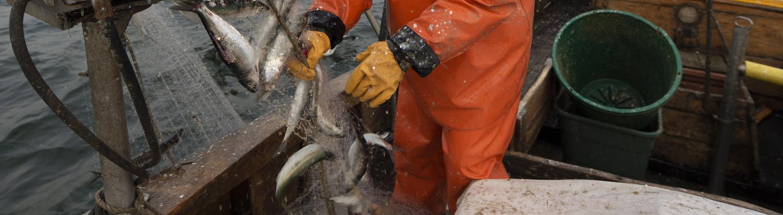 Fischfang in der Ostsee