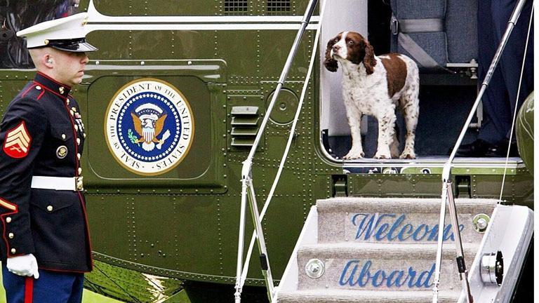 """Hund """"Spot"""" von George W. Bush verlässt einen Helikopter"""