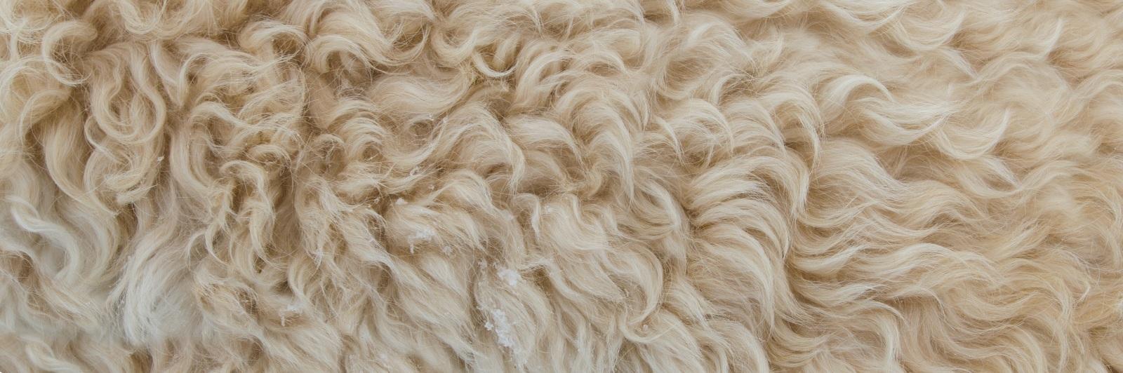Wärmendes Tierhaar: Schafpelz oder auch einfach Wolle