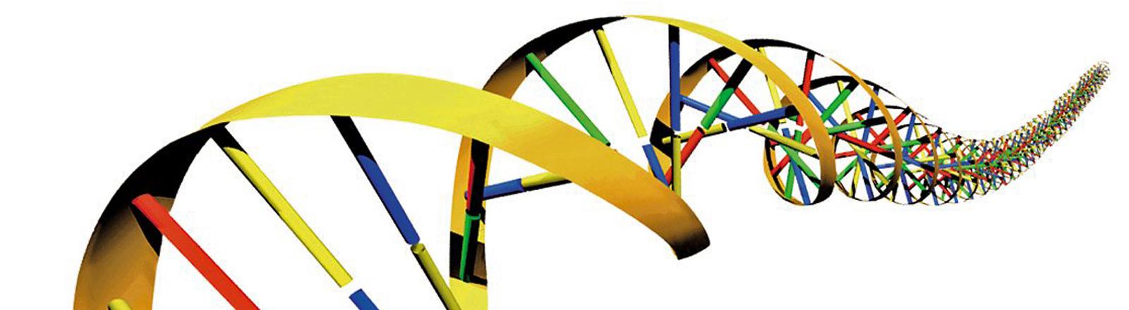 Die Doppel-Helix des menschlichen DNA-Codes: Die beiden spiralförmig gewundenen Einzelstränge werden durch chemische Bindungen, so genannten Basenpaarungen, zusammengehalten.