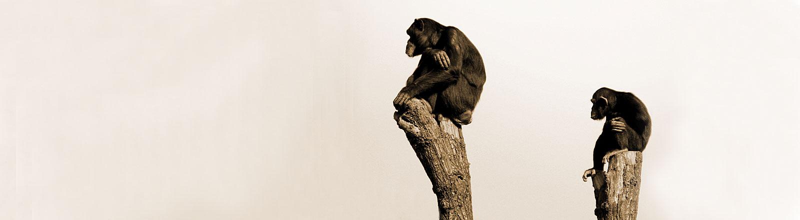 Zwei Affen sitzen auf zwei Bäumen