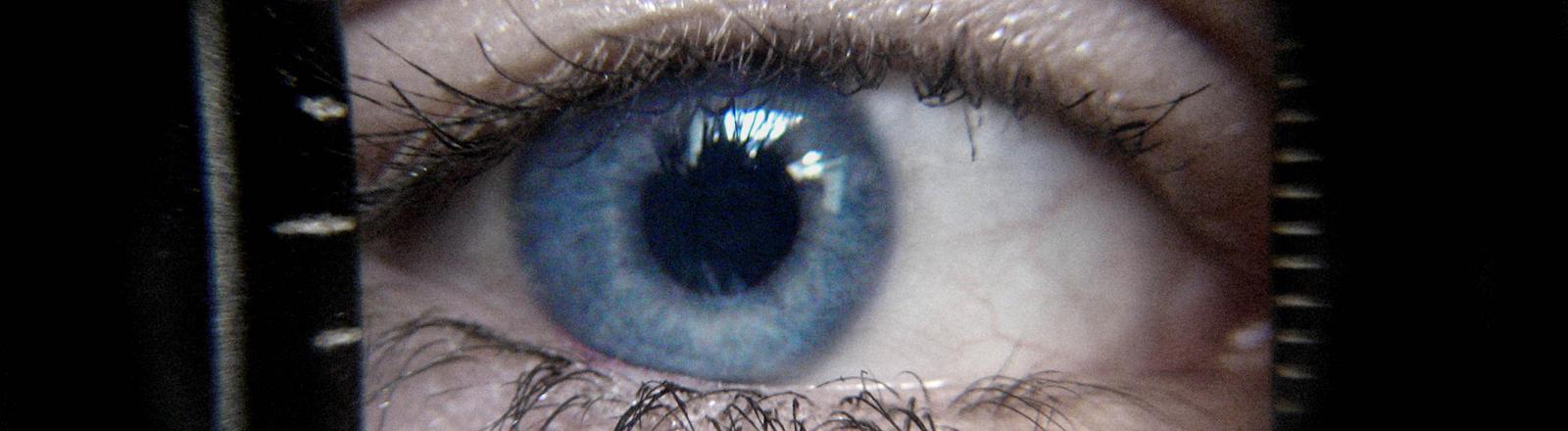 Ein blaues Auge in ganz groß.