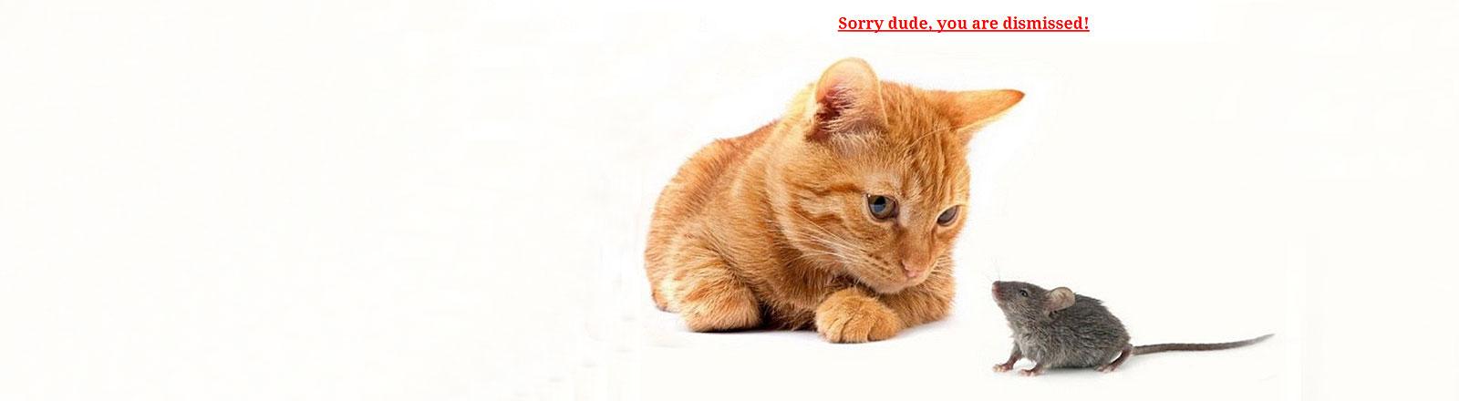 Katze schaut auf Maus, Schriftzug: Sorry dude, you are dismissed!