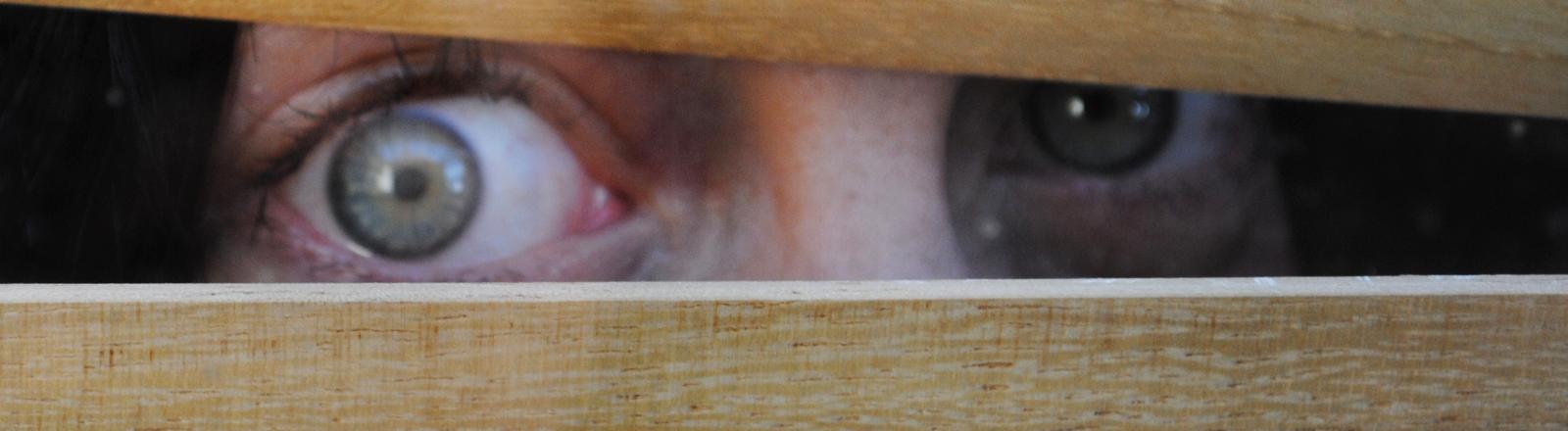 Eine Frau schaut mit weit aufgerissenem Auge zwischen zwei Holzlatten hindurch.