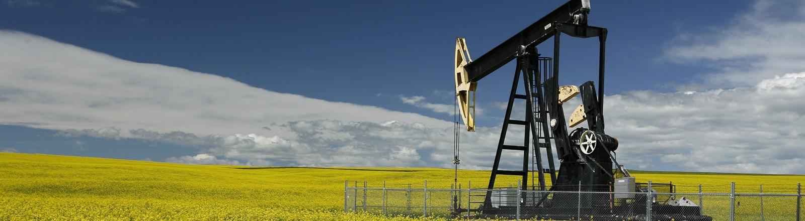 In Alberta steht mitten in einem Rapsfeld eine Öl-Förderanlage.