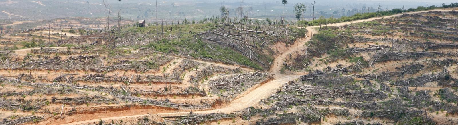 Gerodete Waldfläche auf der indonesischen Insel Sumatra; Bild: dpa