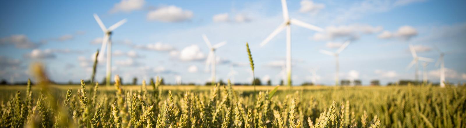 Windkrafträder mit Weizenfeld im Vordergrund; Bild: dpa