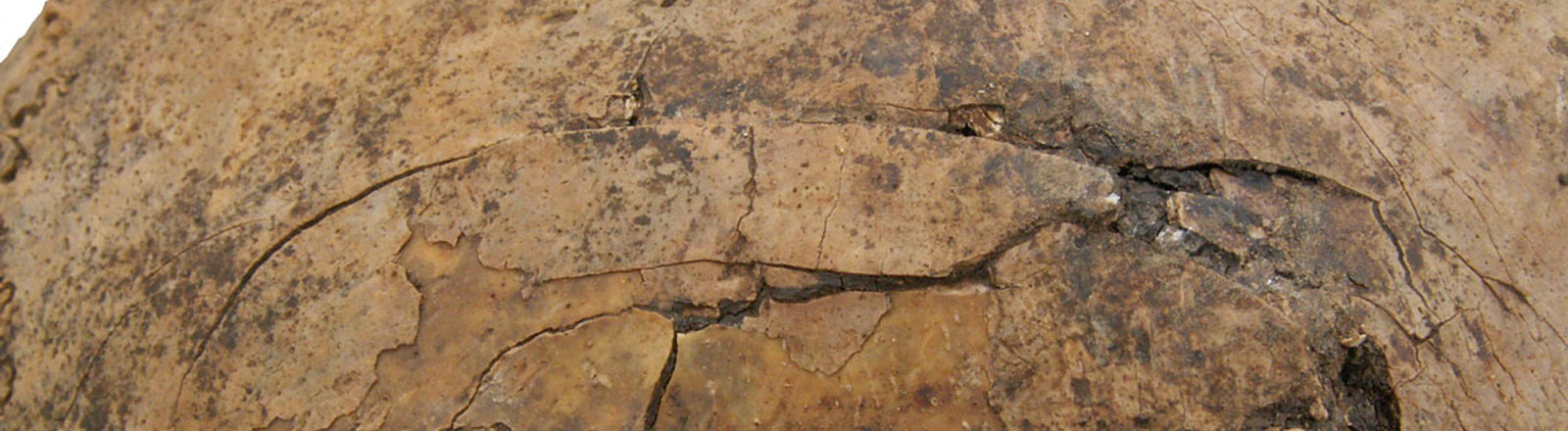 Zertrümmerter Schädel eines drei bis fünf Jahre alten Kindes; Bild: dpa | Christian Meyer