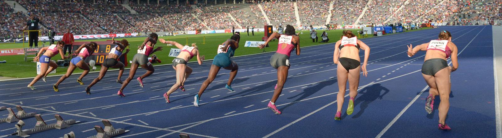 Der 100-Meter-Lauf der Frauen startet am 31.08.2014 beim 73. ISTAF-Stadionfest im Olympiastadion in Berlin.