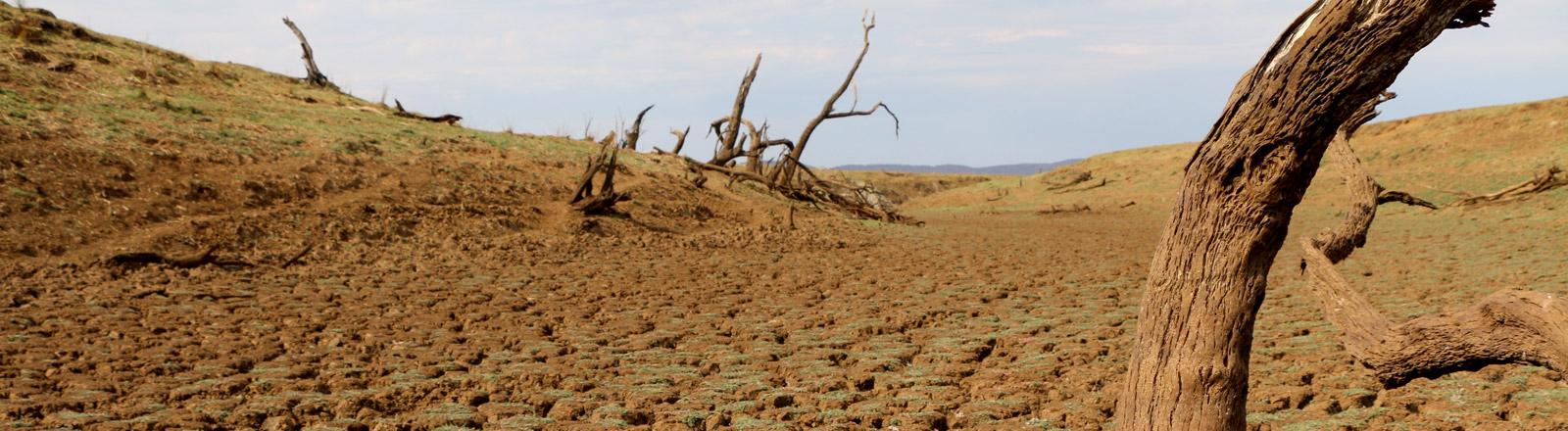 Ein vertrocknetes Feld in Afrika