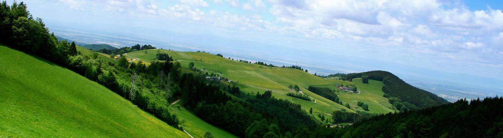 Blick über Hügel mit Wald und grünen Wiesen.