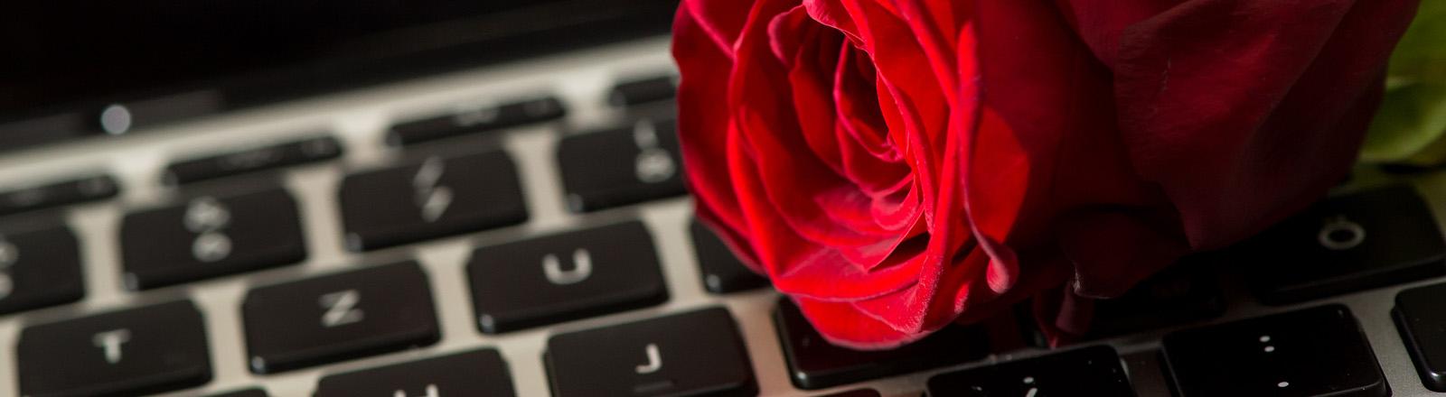 Rote Rose auf eine Computertastatur