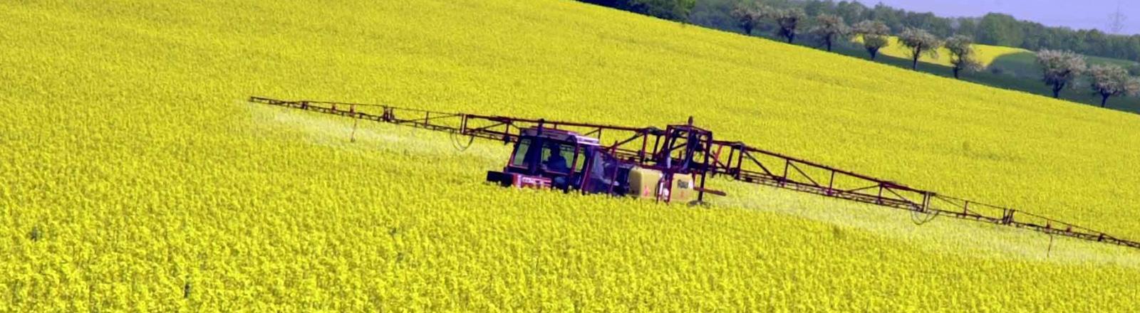 Ein Traktor fährt über ein gelbes Rapsfeld und versprüht mit einer Anhängespritze eine Substanz auf das Feld; Foto: dpa