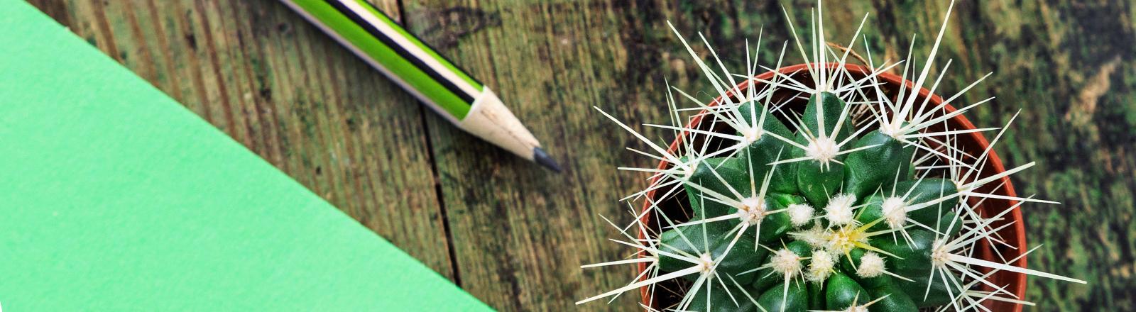 Ein langweiliger Kaktus steht auf dem Schreibtisch.