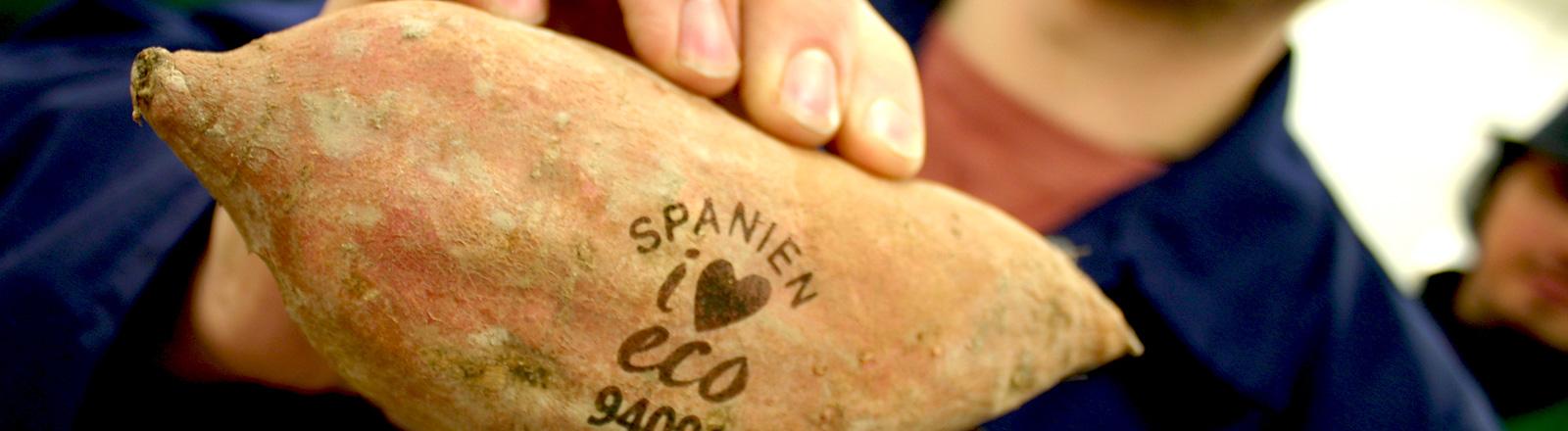 """Eine Hand hält eine Süßkartoffel. Auf der Kartoffel steht """"Spanien"""" sowie ein i in Verbindung mit einem Herzen. Sowie eco und eine Zahlenreihe."""