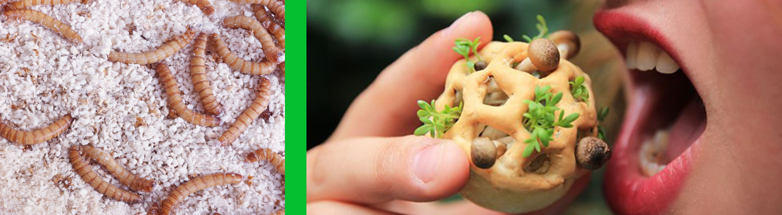 Collage aus zwei Fotos. Links sind Mehlwürmer abgebildet. Rechts beißt eine Frau in einen kleinen Kuchen, aus dem Pilze herauswachsen.