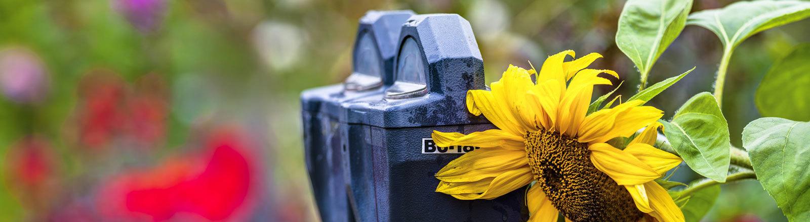 Parkuhr mit Sonnenblume