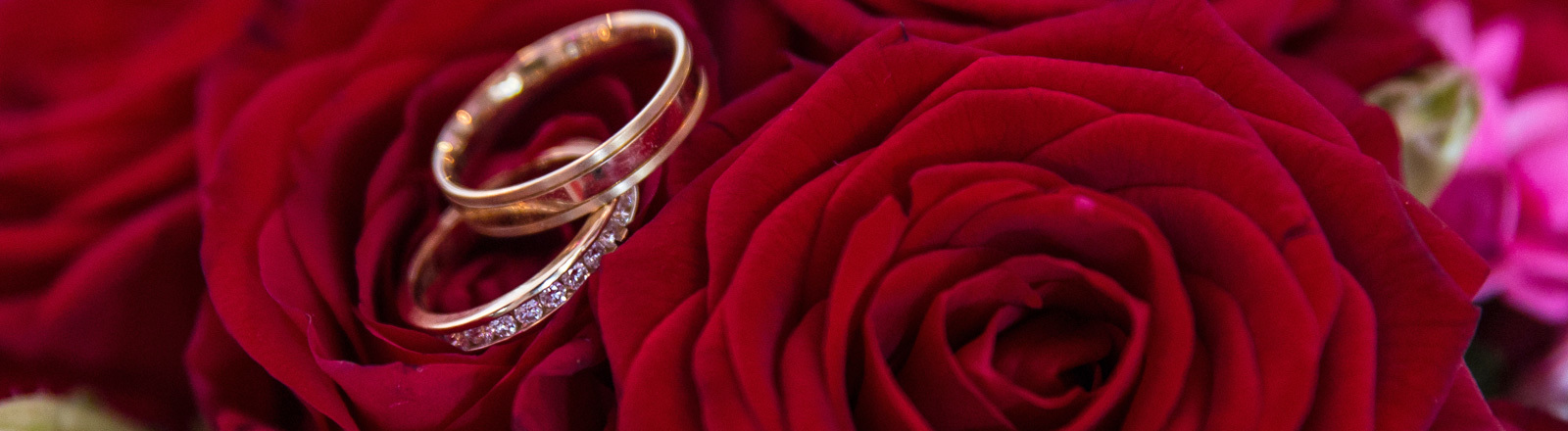 Zwei Ringe liegen auf roten Rosen.