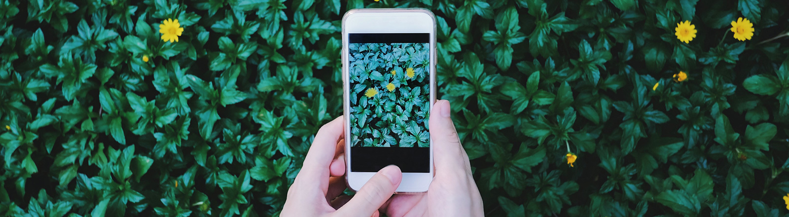 Zwei Hände halten ein Smartphone vor Blumen. Auf dem Handy-Display ist die Wiese zu sehen.
