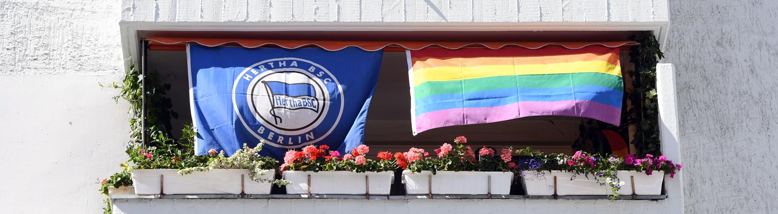 Neben einer Fahne von Hertha BSC hängt eine Regenbogenflagge