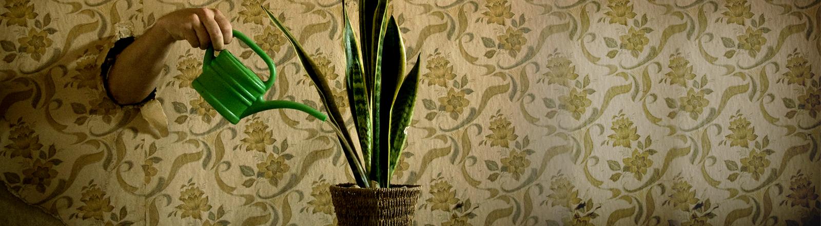 Aus einer Wand kommt eine Hand, die eine Gießkanne hält und eine Pflanze gießt