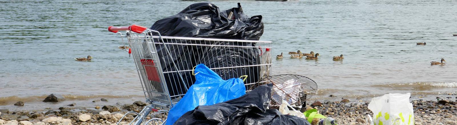 Plastikmüll am Bonner Rheinufer