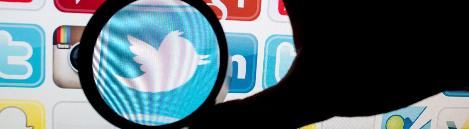 Das Twitter-Logo unter einer Lupe.