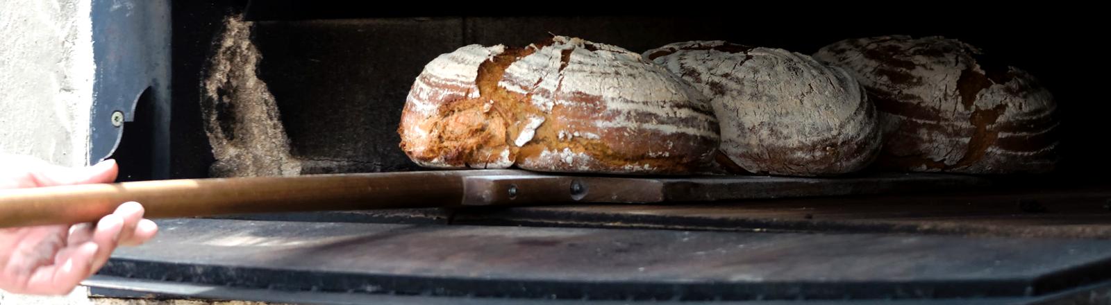 Drei Brote werden in einen Steinofen geschoben